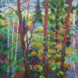 Deep Forest Birches - 5ftx5ft
